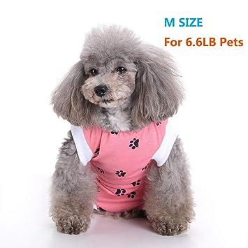 Amazon.com: NEPPT - Traje quirúrgico para perro, para ...