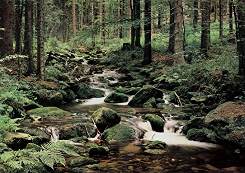 "Photo Wall Mural Wallpaper- STREAM IN THE FOREST -NON-WOWEN - 137.8""x102.4""-350x260cm- 7 Strips digital print-Sea Ocean Waterfall Flowers City Map Paris London America (Caribbean Wall Mural)"