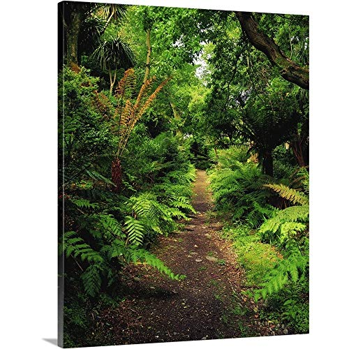 Glanleam, Co Kerry, Ireland; Pathway Lined by Tree Ferns Canvas Wall Art Print, 24