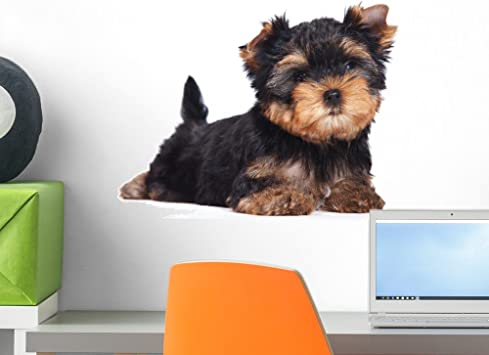 Amazon Com Wallmonkeys Yorkshire Terrier Puppy White Wall Decal Peel And Stick Graphic 18 In W X 12 In H Wm81358 Home Kitchen