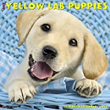 Just Yellow Lab Puppies 2018 Calendar
