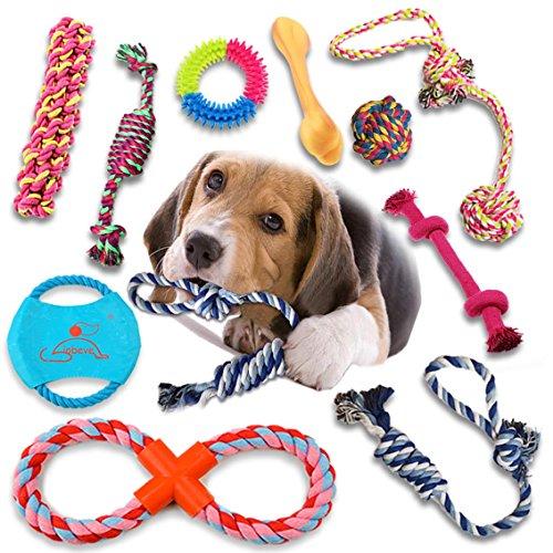 Christmas Gifts for Dogs: Amazon.com