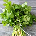 David's Garden Seeds Herb Cilantro Long Standing 9112W (Green) 200 Organic Seeds