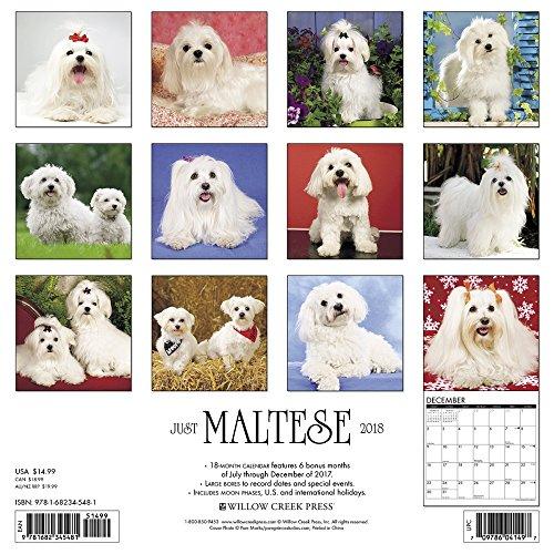 Maltese 2018 Wall Calendar Photo #3