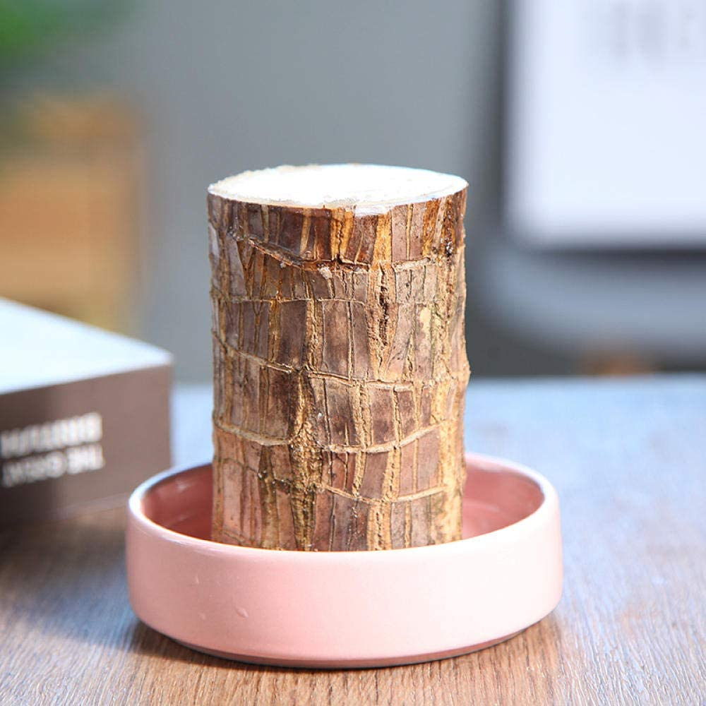 Brazilian Wood + Basin FFFSSS Brazilian Lucky Wood Hydroponic Potted Plant Stump Air Purifying Plants Indoor Lucky Wood Office Desktop Decoration Diameter 5-6 cm