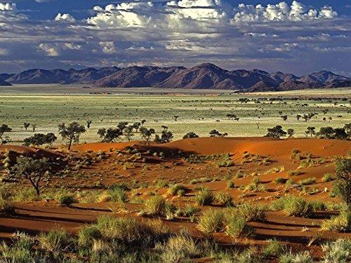 Art Silk Fabric Cloth Rolled Wall Poster Print - Desert Trees Sand Plants Mountains - (Size:32x24 (Desert Sand Silk)