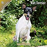 Rat Terrier 2011 Wall Calendar #30435-11