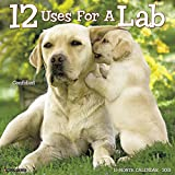 12 Uses for a Lab 2018 Wall Calendar (Dog Breed Calendar)