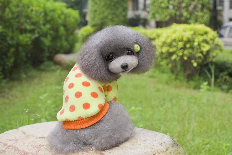 HSDDA Costume da Compagnia per per per Feste Pet Supplies Varie Teddy Vestiti per Cani Vestiti per Animali Vestiti per Cani Colore Point a Due Zampe in Pile (colore  Blu, Taglia  S) Pet Uniform 45c454