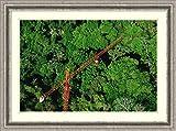 Framed Art Print 'Rainforest canopy research crane, STRI, Panama' by Mark Moffett offers