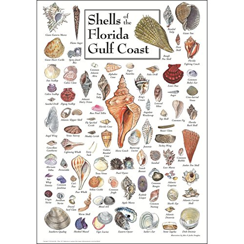 - Earth Sky & Water Poster - Shells of Florida's Gulf Coast