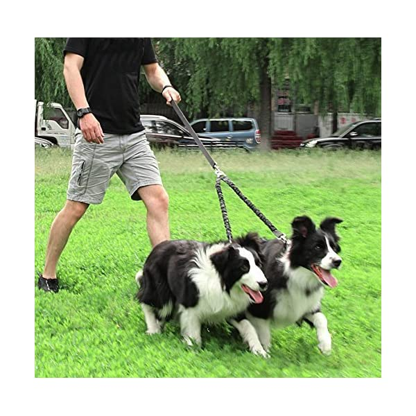 Snagle Paw Tangle Free BungeeX2 Double Dog Leash Coupler, 360° Swivel No Tangle Double Dog Walking & Training Leash, Comfortable Shock Absorbing Reflective Bungee Lead Walk 2 Dogs with Ease 6