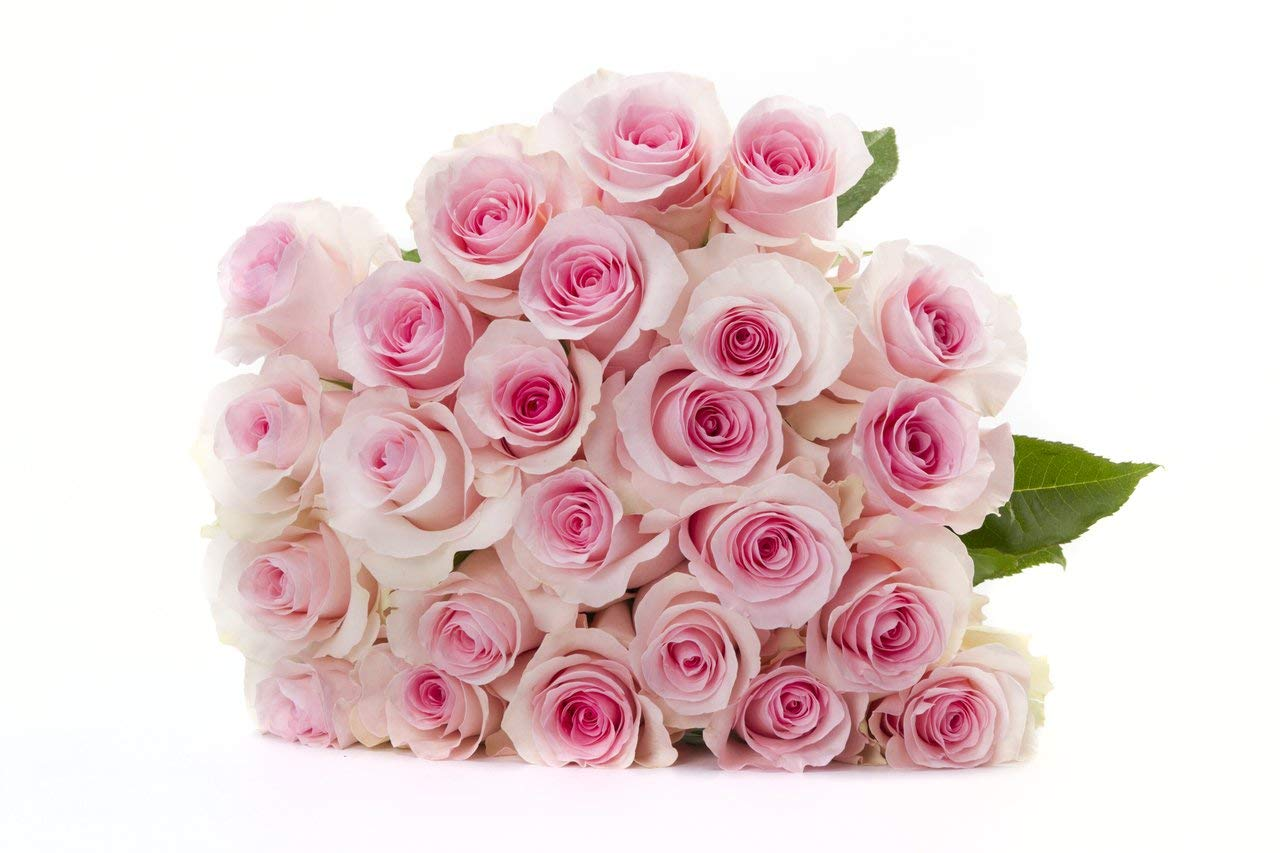 Martha Stewart Roses by BloomsyBox - Two Dozen Pink Christa Roses Selected by Martha and Hand-Tied, Long Vase Life