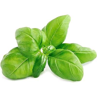 Basil Seeds, Sweet Basil Seeds Outdoor Garden Yard Bonsai Spicy Non-GMO Herbs Plants Basil Seeds 500pcs: Sports & Outdoors