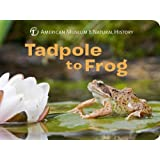 Tadpole to Frog (Science for Toddlers) (American Museum of Natural History)