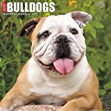 Just Bulldogs 2017 Wall Calendar (Dog Breed Calendars)