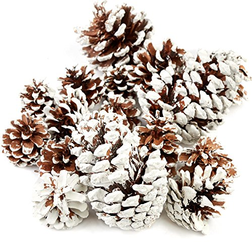 Factory Direct Craft Christmas Holiday Snow Tipped Natural Pine Cones Half Pound Bag