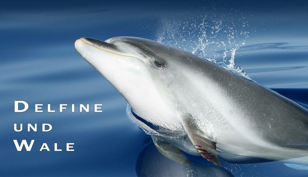 delfine-und-wale-ein-immerwhrender-fotokalender