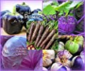 Serendipity's Purple Vegetable Seed collection 5 Varieties 280 Seeds Carrot Pepper More! Packed separate Non Gmo All Natural