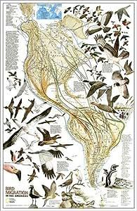 National Geographic RE01020306 Mapa de Migraci-n de Aves - Hemisferio Occidental - Laminado