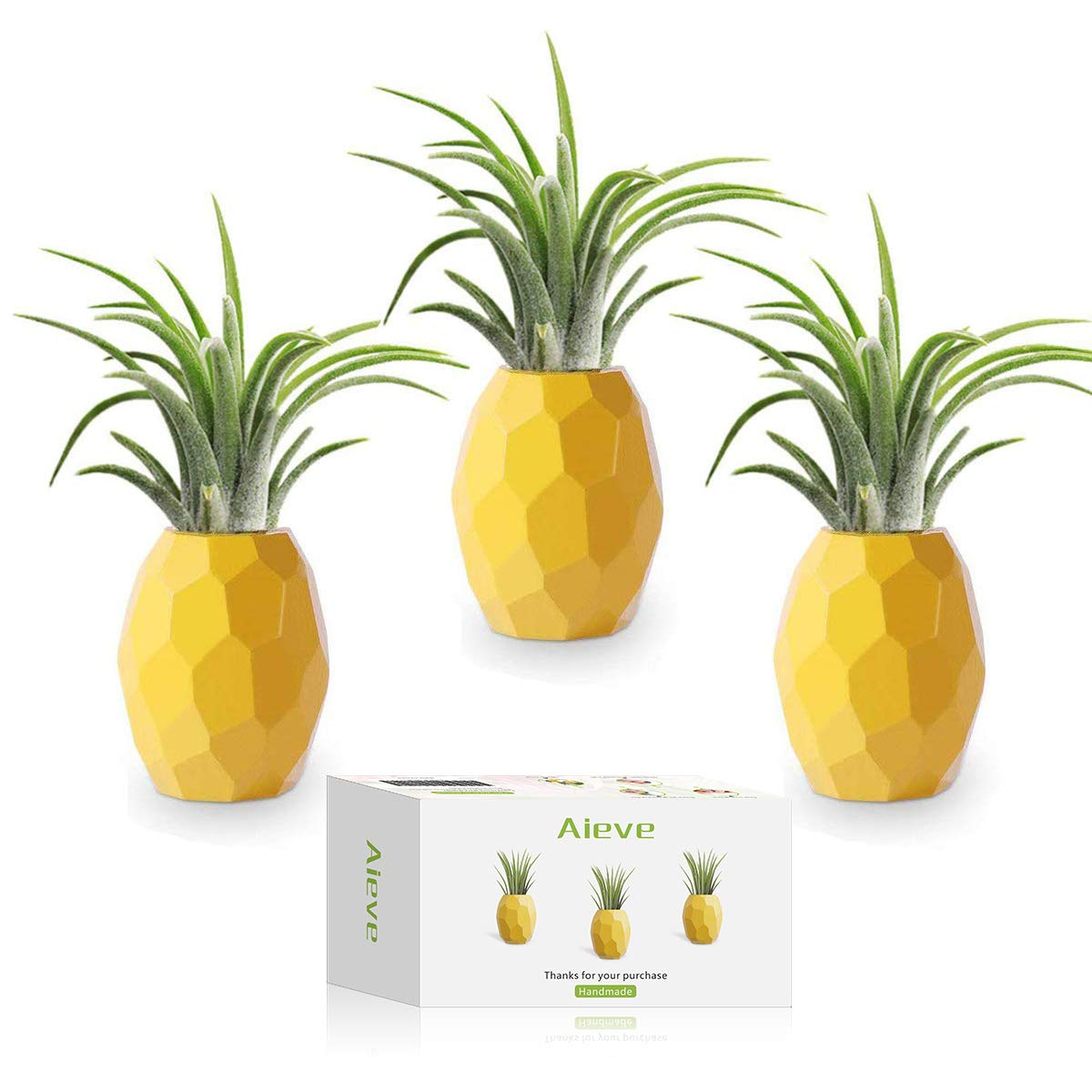 AIEVE Air Plant Holder,3 Pack Pineapple Planter Tillandsia Holder Container Pot Tabletop Stand with Magnet for Hanging Tillandsia Air Plants Display Wall Indoor Home Decor (Large)