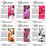 6 Packets Combo x CLARKIA GODETIA AZALEA Flower Seeds - Clarkia amoena - 6 Individual Packets - By MySeeds.Co