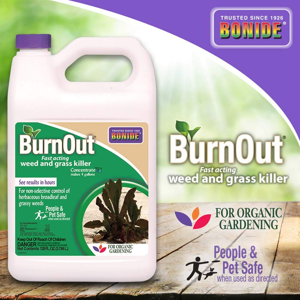 Bonide (BND7465) - Burnout Concentrate, Fast Acting Weed and Grass Killer (1 gal.) by Bonide