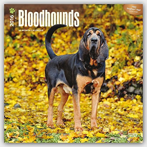 Download Bloodhounds - 2016 Calendar 12 x 12in PDF