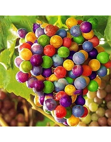 EgBert 50Pcs/Pack Semillas De UVA Arco Iris Colorido Jardín Plantas Frutales Sweet Kyoho Semillas