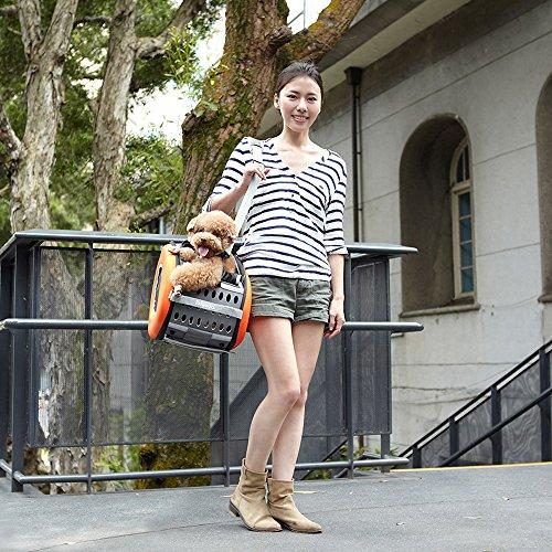 ibiyaya 1 Pet + + + on Dogs and