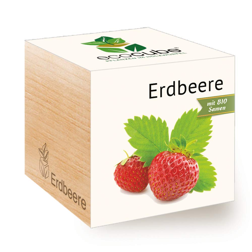 Feel Green Ecocube Fraise Bio Sames Idée Cadeau Durable (100% Ecofriendly), Grow Your Own/Culture, Plantes dans la Vague en Bois, fabriqué en Autriche