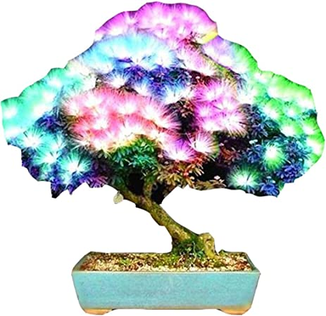 Plants Seeds Bulbs Bonsai Tree Albizia Julibrissin Seeds Rare Flowers Seed In Bonsai Pink Tree Home Garden Patio New Times Bg