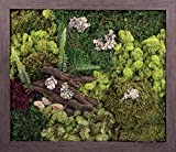 Carpentree 27''x23'' Wild Woods-Biophilic Framed Art