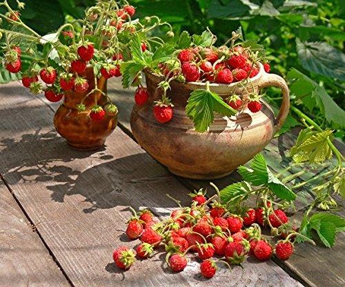 Semillas de Regina de Fresa Salvaje - Fragaria vesca - semilla: Amazon.es: Jardín