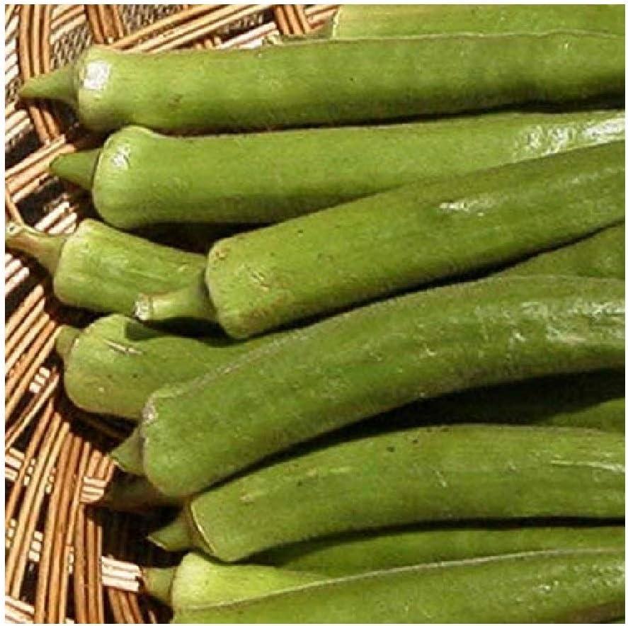 David's Garden Seeds Okra Emerald Green Velvet 6911 (Green) 100 Non-GMO, Heirloom Seeds