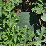 buy Watermelon Garden Seeds - Sugar Baby - 4 Oz - Non-GMO, Heirloom Vegetable Gardening Fruit Melon Seeds now, new 2019-2018 bestseller, review and Photo, best price $9.12