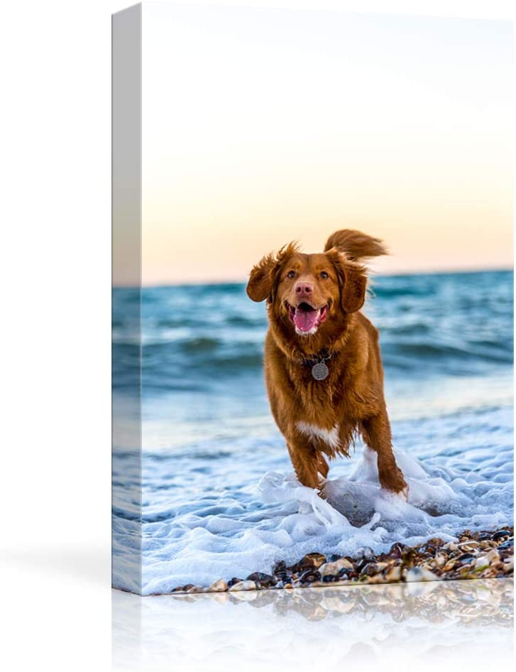 Amazon Com Nwt Custom Canvas Prints With Your Photos For Pet Animal Personalized Pictures To Canvas For Wall Framed 10x8 Inches Posters Prints