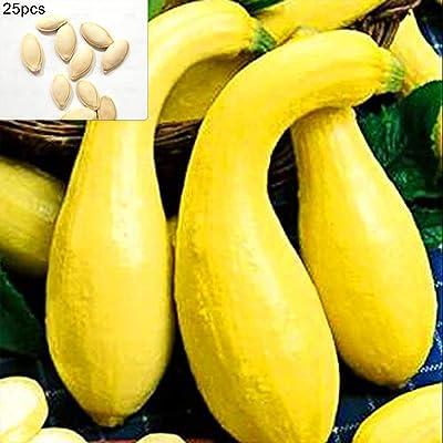 Gilroy 25Pcs Curving Yellow Pumpkin Seeds Vegetable Plant for Home/Garden/Outdoor/Yard/Farm Planting : Garden & Outdoor