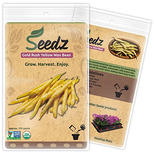 CERTIFIED ORGANIC SEEDS (Appr. 125) - Gold Rush Yellow Wax Bean Seeds - Heirloom Seeds Beans Collection - Non GMO, Non Hybrid Vegetable Seeds, - Bean Collection