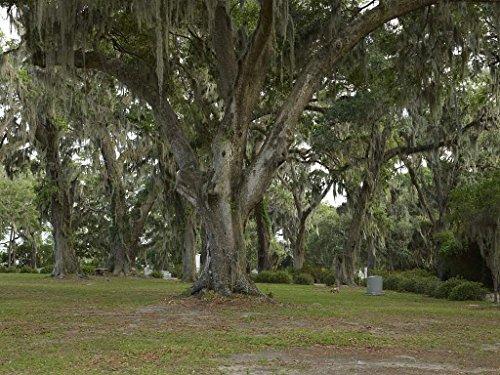 - Photograph| Spanish moss-draped trees in Bonaventure Cemetery in Savannah, Georgia 1 Fine Art Photo Reproduction 60in x 44in