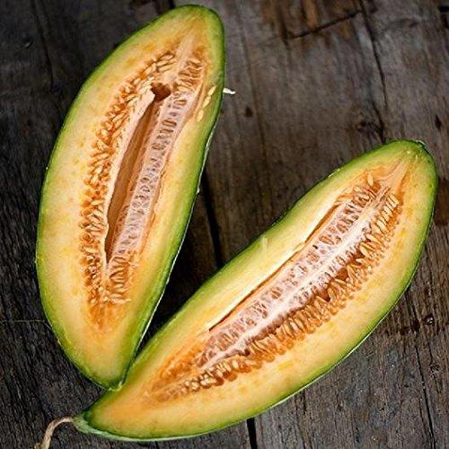 David's Garden Seeds Fruit Melon Banana LN8899 (Orange) 50 Non-GMO, Heirloom Seeds (Banana Melon Seeds)