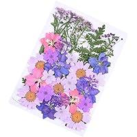 EXCEART 34pcs Real Dried Pressed Flowers DIY Multiple Daisies Dandelion Natural Dried Flowers Leaves Set Flower Herbs…