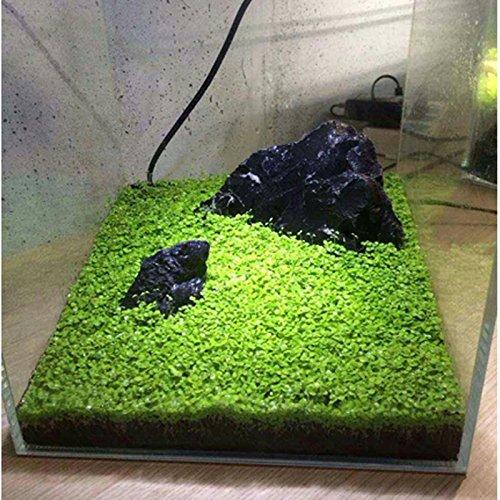 Pecera Planta Planta Semilla Paisaje Hierba Semilla Musgo Plantas Camar/ón Tanque Plantas de Agua Leaftree Acuario Agua Hierba Semilla