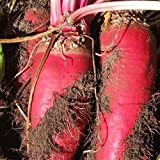 New 50 Red Mammoth Fodder Beet Seeds - Everwilde Farms Mylar Seed Packet