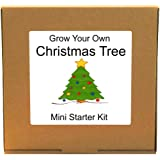 Grow Your Own Christmas Tree Kit - Indoor Windowsill Gardening Gift