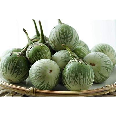 Thai Round Green Eggplant Seeds (100 Seeds) : Garden & Outdoor