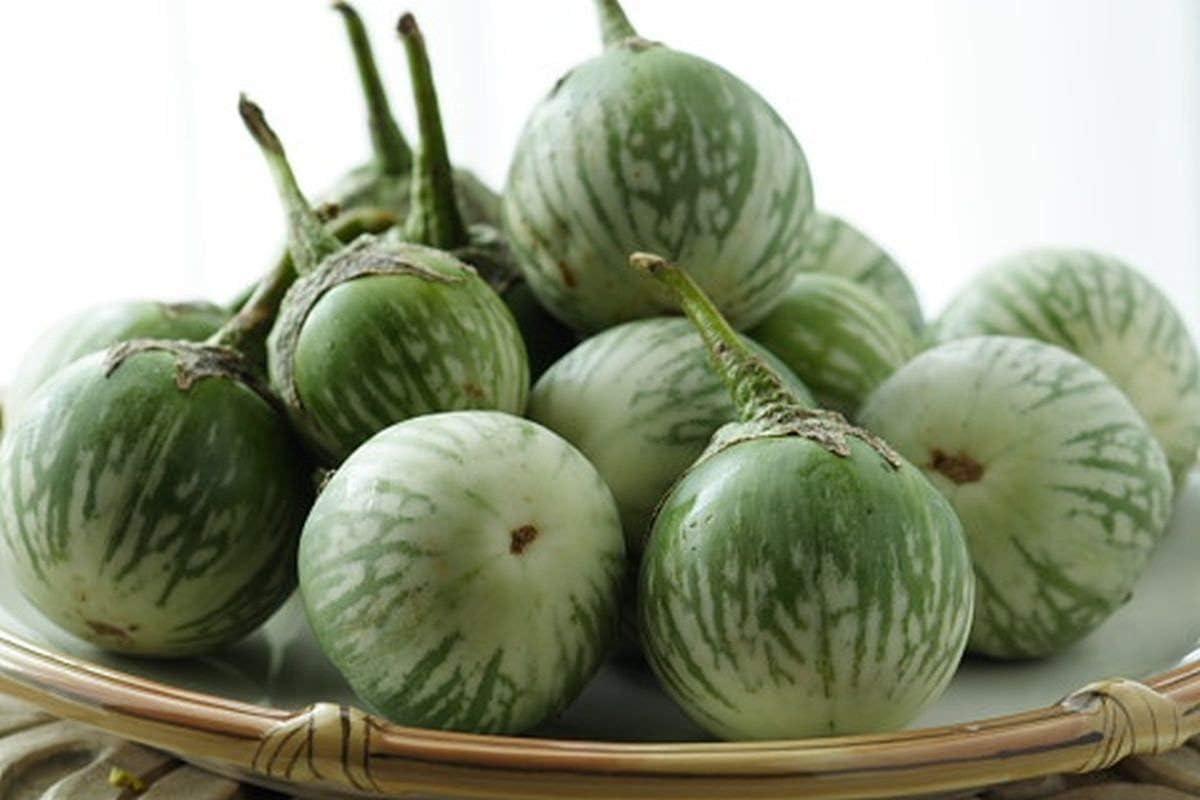 Round Eggplant Solanum 25 Seeds ThailandMrk
