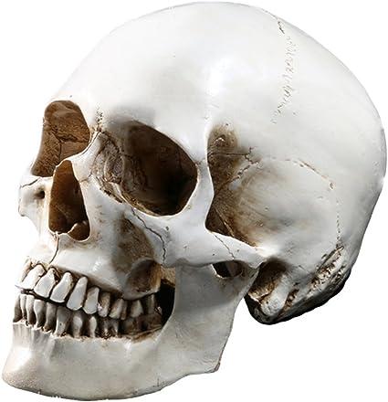 1:1 Resin Life Size Model Human Head Skull Medical Anatomical Skeleton Teaching