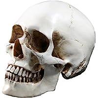 Tinksky Lifesize 1: 1modelo de calavera humano Replica