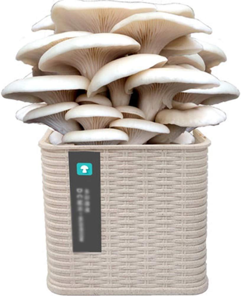Juego Cultivo de Hongos Kit, Cultivo y Producción de Hongos en Casa, Kit Autocultivo Setas, Crece en 15-25 dias, Guía Básica de Cultivo Personal, Recreacionalwhite-White Oyster Mushroom